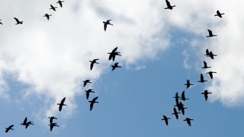 Mobilfunk verletzt biologische Systeme von Vögeln