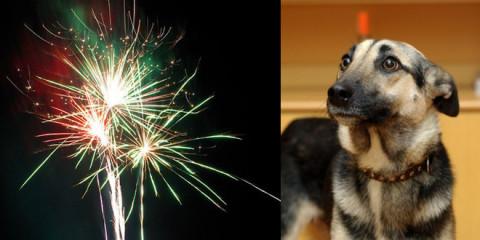 Silvester, Stress PUR für alle Tiere, auch unsere Haustiere!