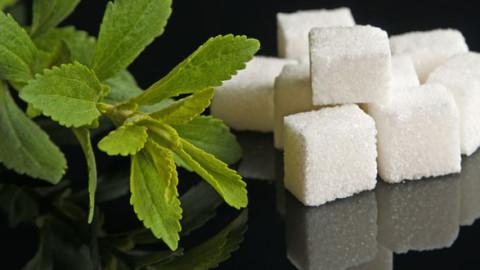 Stevia, gegen den Zucker ist ein Kraut gewachsen
