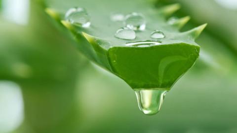 Aloe Vera, die Gesundheit aus der Natur